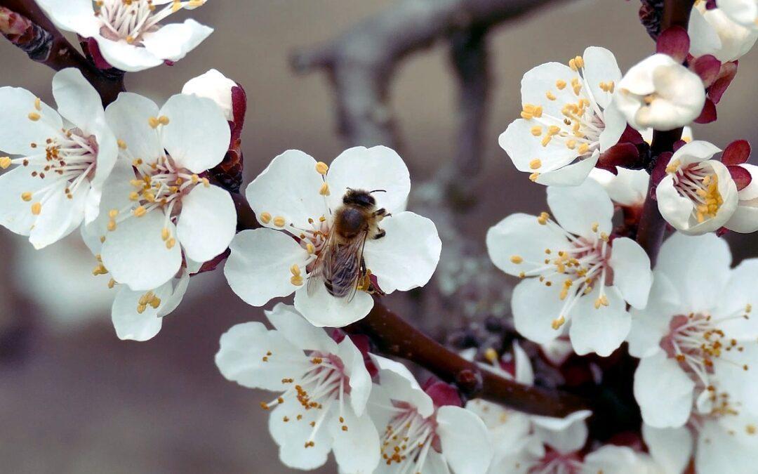 Benedek napja, a tavasz kezdete – március 21